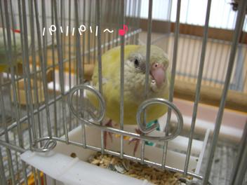 20080502鳥2