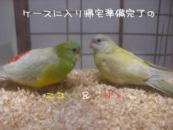 20080502鳥3