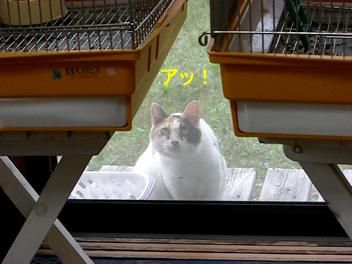 20080704ネコ1