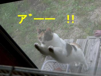 20080704ネコ3
