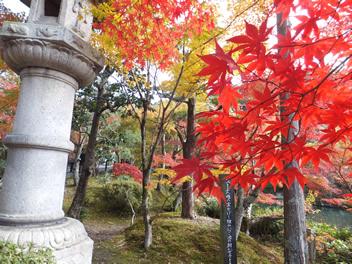 20121113永観堂5