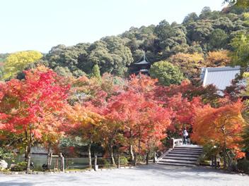 20121113永観堂7