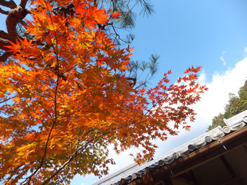 20121114圓光寺4