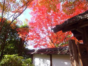 20121114金福寺2