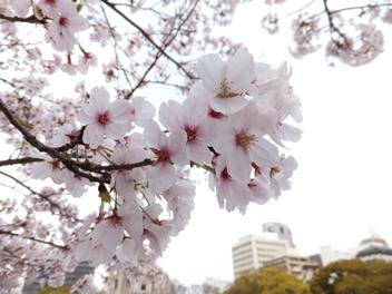 20140403お花見2