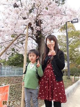 20140403お花見4