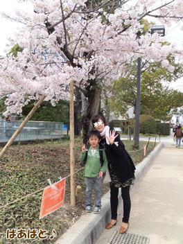 20140403お花見5