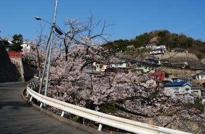 2503桜03
