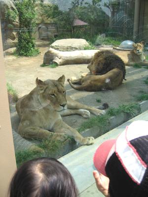 東武動物公園04