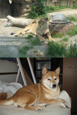 東武動物公園05
