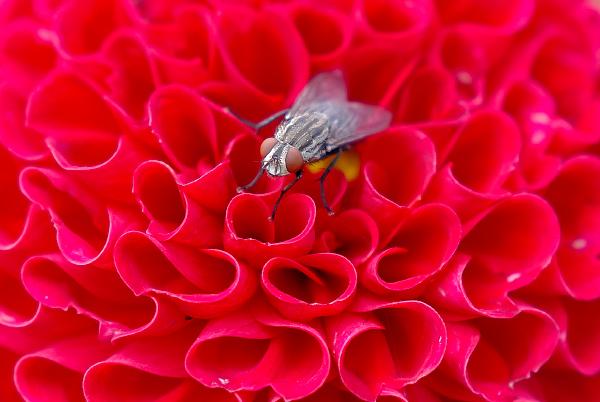 昆虫 ハエ 蝿