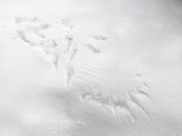 カラス 雪