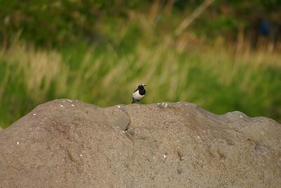 名前がわからない鳥