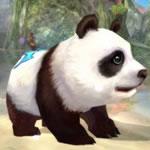 パンダ1次形態