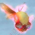 金魚2次形態