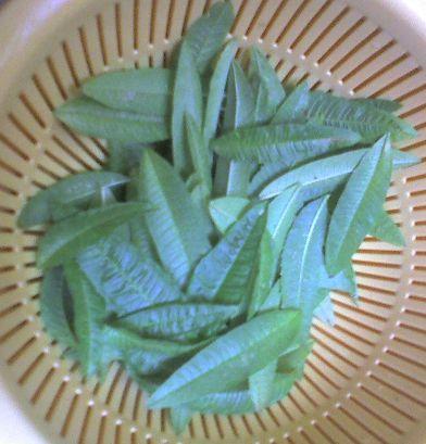 1112 1-2009_0726収穫