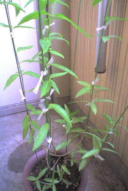 1114 2-2009_0726収穫後