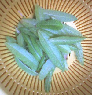 1121 4-2009_0726収穫