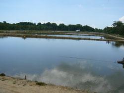 エビ池の風景