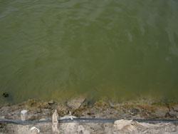 池の色67日目