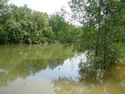 20090621川の様子