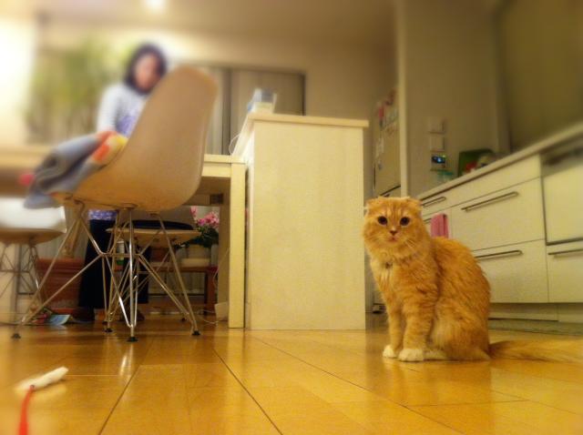 20120404_猫じゃらし1