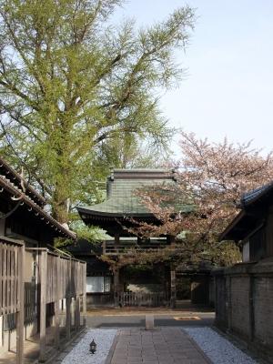 門司の桜寺01