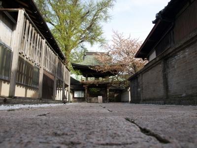 門司の桜寺02