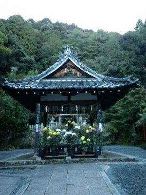 大豊神社のみごとな菊その【1】11月11日