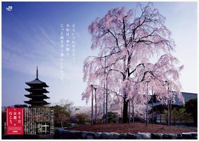 JR東海「そうだ、京都行こう」2011年春 東寺編
