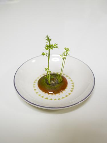 にんじんの水栽培