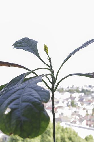 アボガドの秋葉
