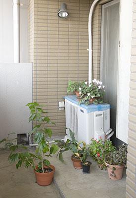 ベランダの植物