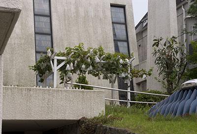 東京都民教会のブドウ棚