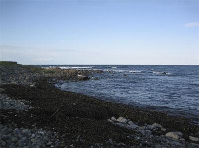 東北の海岸