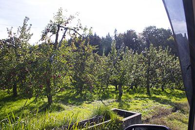 川場村沿道のりんご園