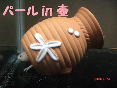 パールin壺
