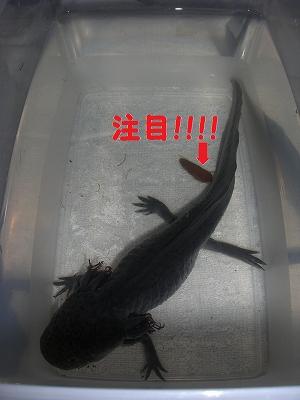 ビックうんこ(`・ω・´)