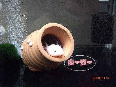 壷好きー♪