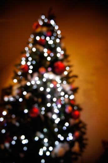 クリスマスツリー ディナー