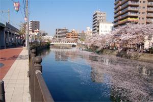 大岡川の桜<2009/4/9>