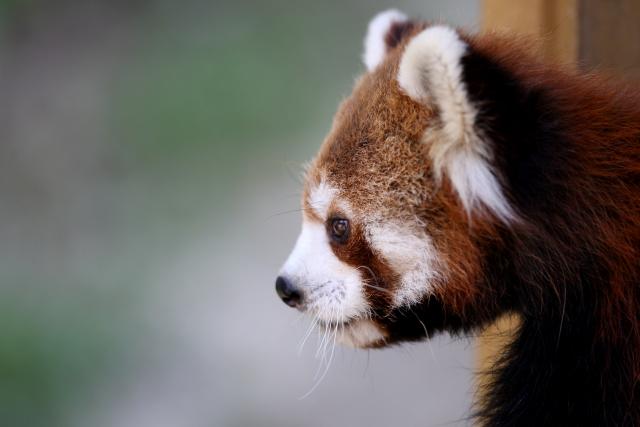 とべ動物園にて優花ちゃんは、とっても元気です。