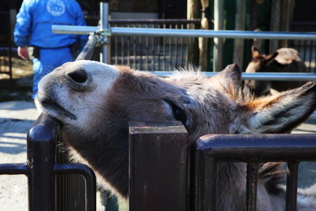 とべ動物園の馬の写真