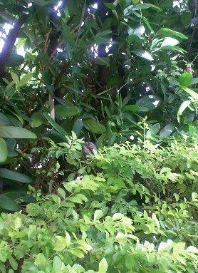 庭の二羽(niwa no niwa no) 小鳥