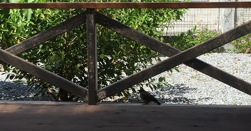 小鳥 L 2 (360x188).jpg