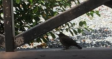 小鳥 L 4 (360x190).jpg