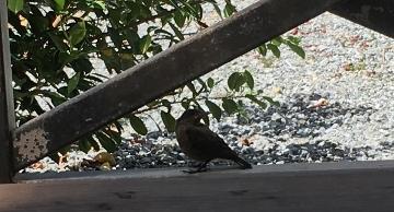 小鳥 L R (360x194).jpg