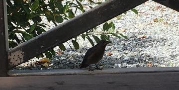 小鳥 R 5 (360x181).jpg
