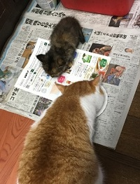 cat foods (2).jpg