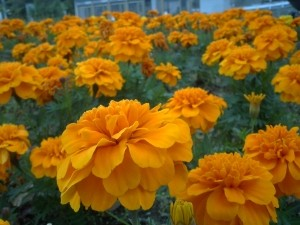 富士川SAの花